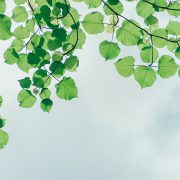 מרחב מחיה ביולוגי וחג העצמאות - שושנה בובליל